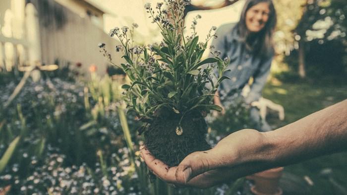 Save Your Soul: Start Gardening