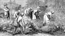 Why Did So Many Christians Support Slavery?