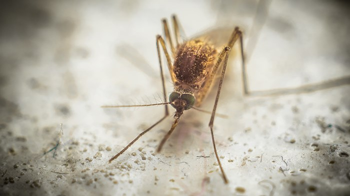 Christians to Science: Leave Animals the Way God Designed Them—Except Mosquitoes