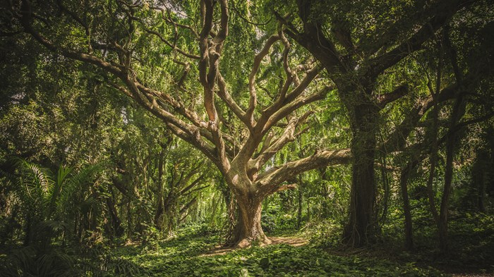 What Trees Teach Us about Life, Death, and Resurrection