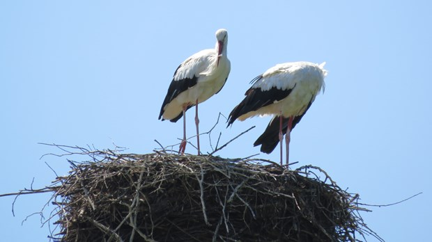 How can we help our marriage to thrive in the empty nest years?