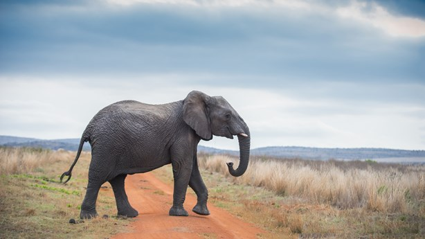 Don't Think About Elephants