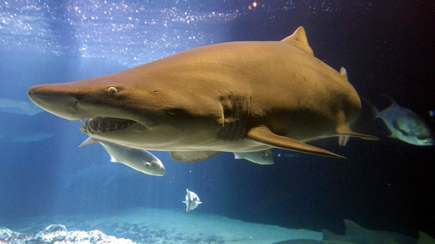 Marine Dad Punches Shark to Save Daughter