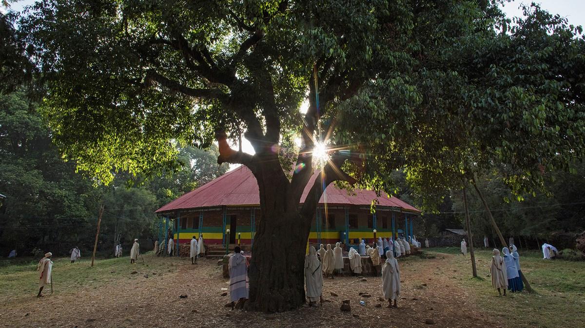 Churches Are Saving Ethiopia's Last Remaining Native Trees