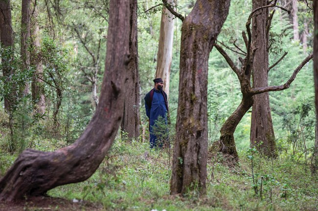 Aba (Father) Kidanemariam stands in the forest of indigenous trees surrounding Menagesha monastery outside Addis Ababa.