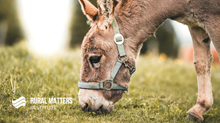 Chasing Donkeys: How Ministry Can Feel in Rural Contexts