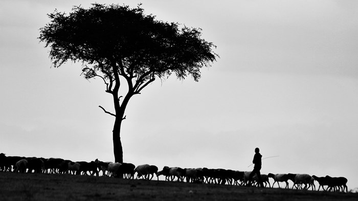 Why Pastors Must Be Shepherds